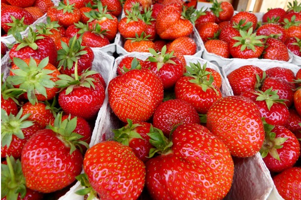 Voll gefüllte Erdbeerschalen mit reifen Früchten am Verkaufsstand in Partenfeld