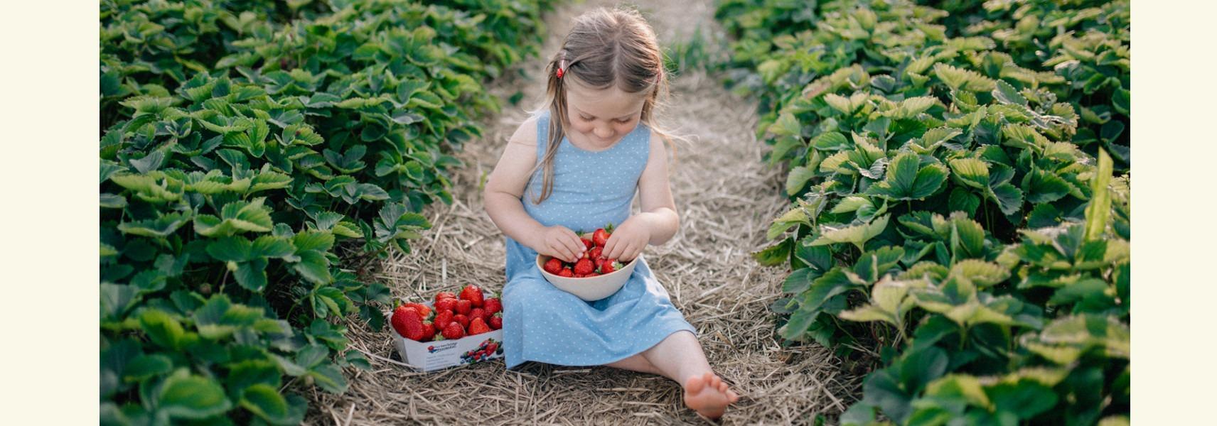 Mädchen sitzt mit voller Erdbeerschale im Erdbeerfeld