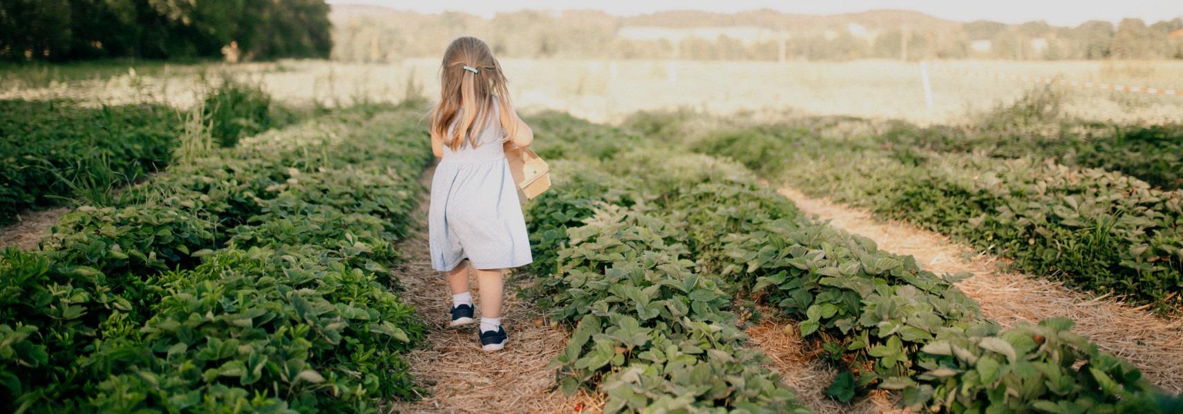 Mädchen mit Korb läuft im Erdbeerfeld in Partenfeld